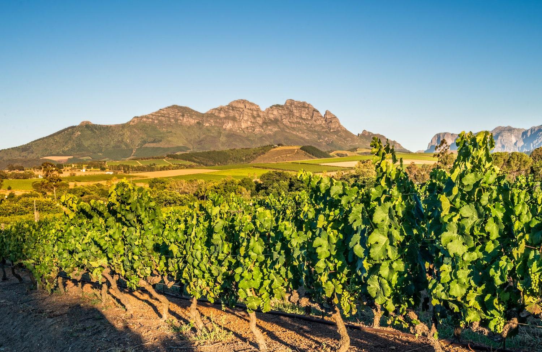 Beyerskloof Vineyards